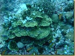 Sponge on Coral