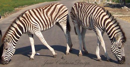 Zebra_Pair_2