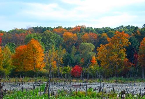 6.Autumn bog-kab