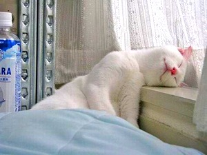 gato-janela1d