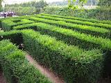 Maze at Schonbrunn