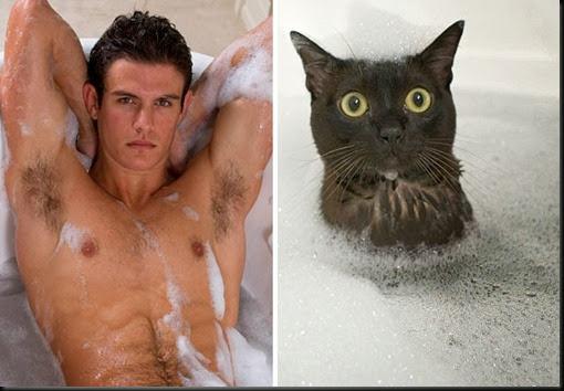 des-hommes-et-des-chatons-men-and-cats-34