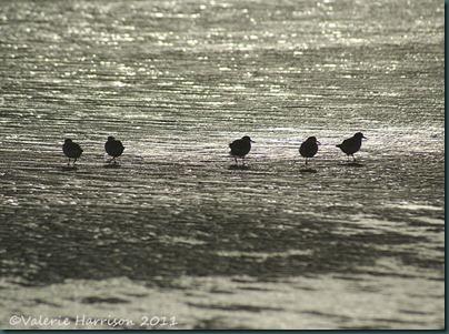 7-waders