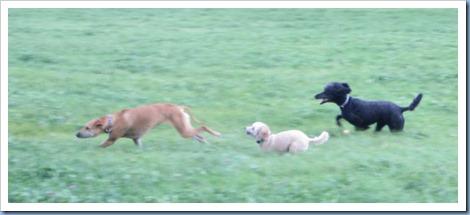 20111016_dogs-running_010