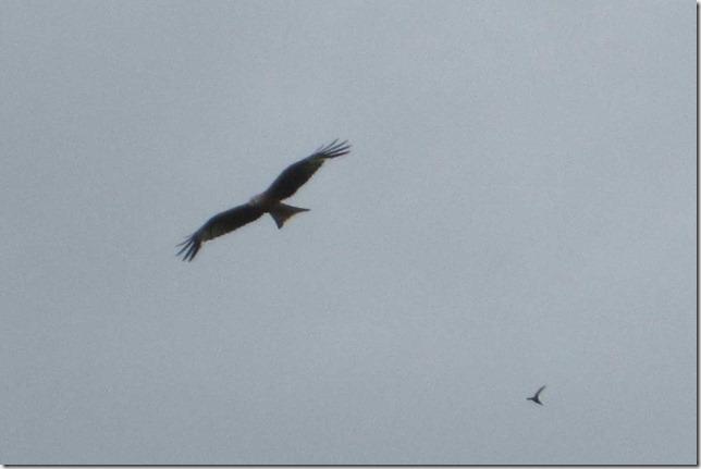 kite-3