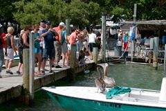 Feeding-the-Tarpon---Unwanted-Guests-2