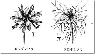 metamorphose014