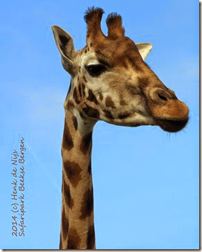 2014 (c) Henk de Nijs<br />Safaripark Beekse Bergen