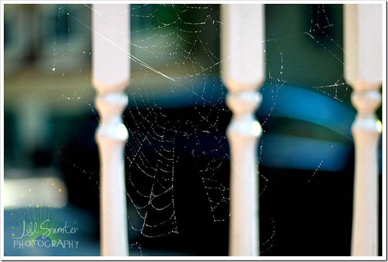 spiders-5049
