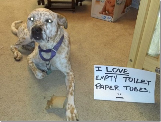 dog-shaming-bad-14