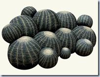 Canape Cactus
