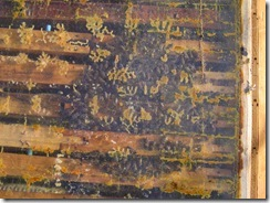 13,11,2011včely a voda 010