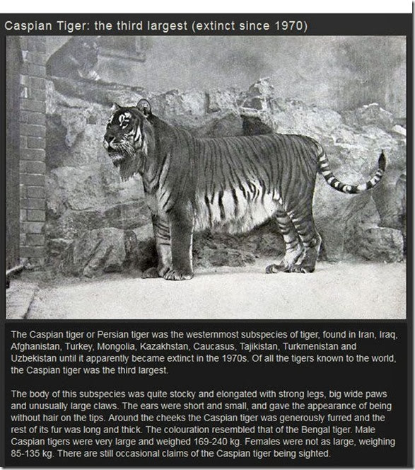 extinct-animals-006