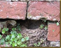 IMG_6084 Yellow wagtail nest