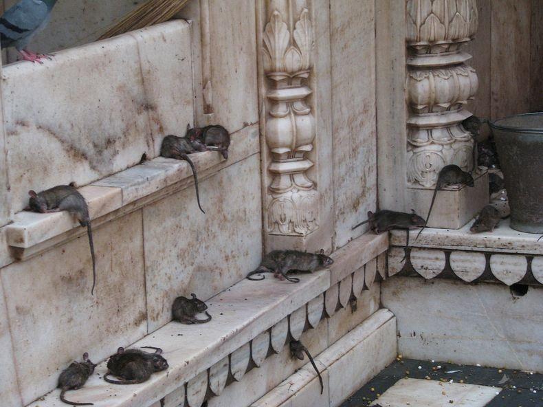 karni-mata-temple-7