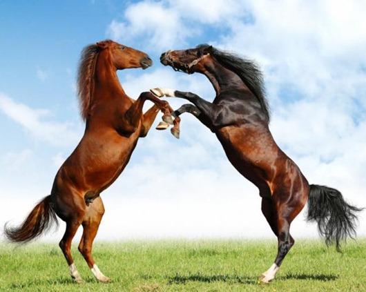 1320292687_europe-horses