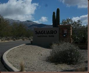 Saguaro01