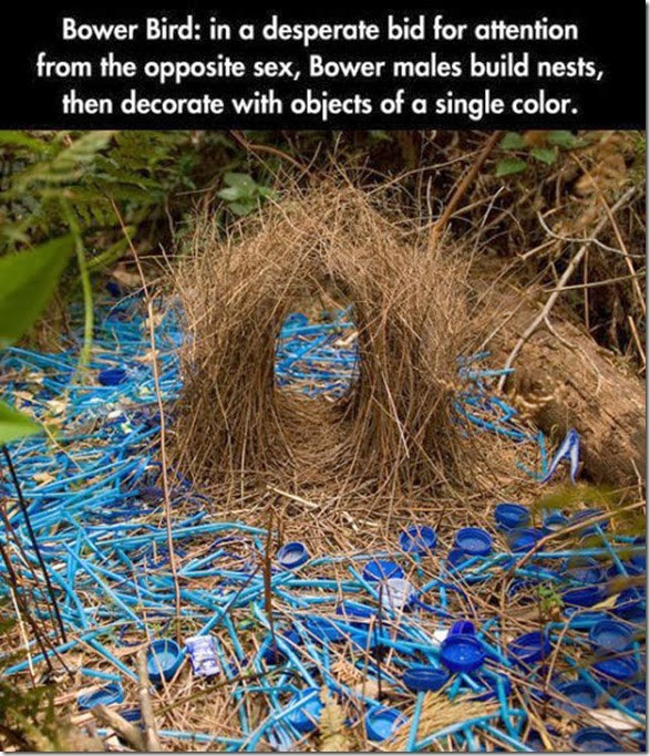 creative-impressed-amazing-022