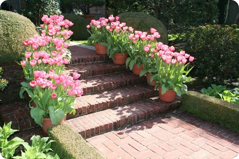 flower-pots-on-steps