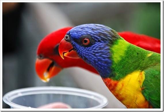 pássaros3