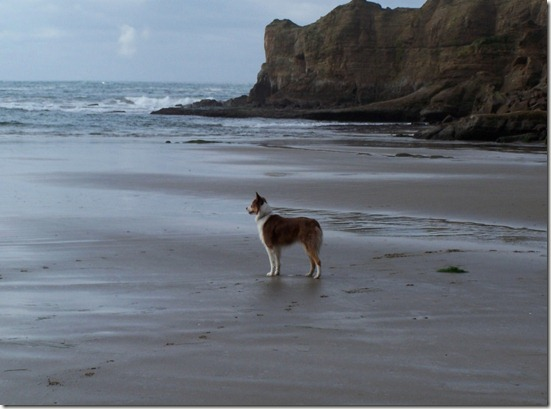 beach kona
