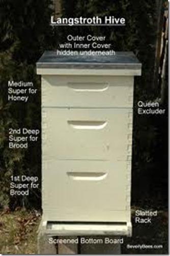 031513 lang hive