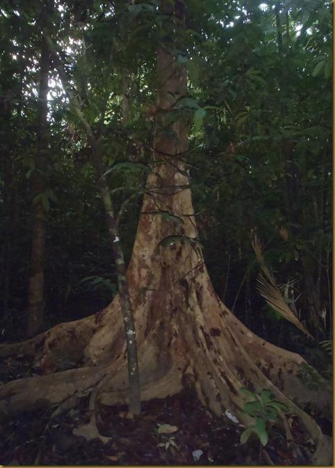 2012_Guyana 020
