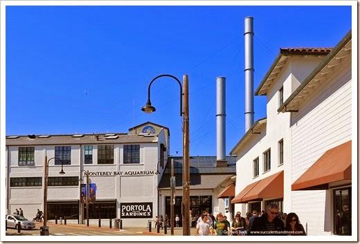 140324_Monterey_0006