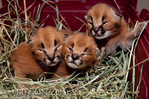 filhotes recem nascidos zoo zoologico desbaratinando animais lindos fofos  (27)