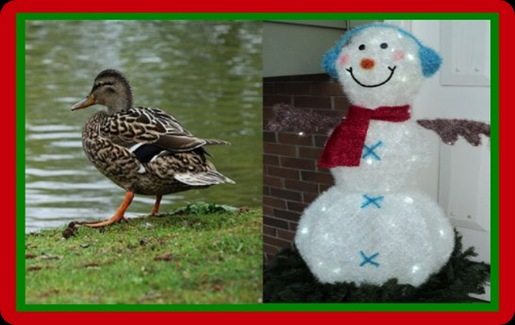 Christmas-Duck-Pond-ShortStory 1