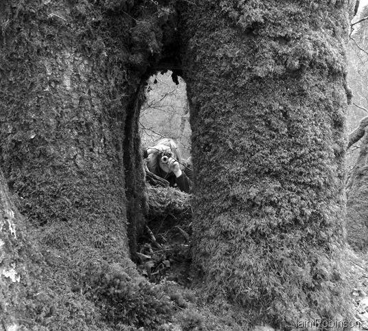 Petra in tree (1280x1139)