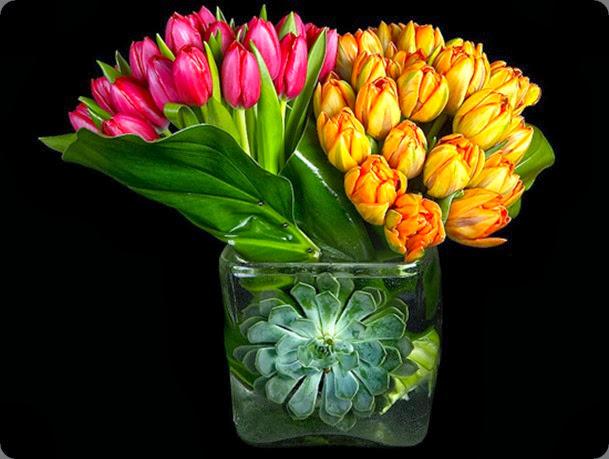 tulips-2 ovando
