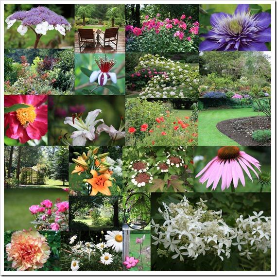 Сад летом 2011