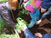 Planting school garden 014.jpg