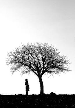 tree23
