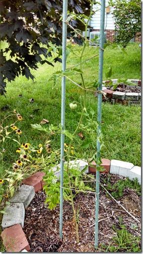 Garden 07 (5)