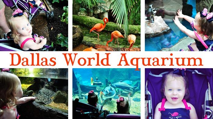 Dallas Aquarium Collage