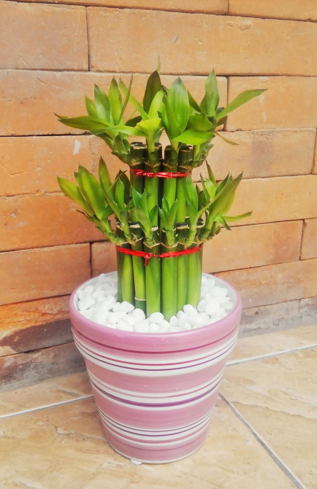 Bambu Rejeki Stairs Of Prosperity Kebun Bibit Buah