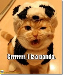 catpanda