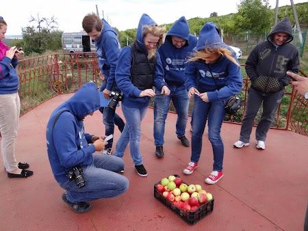 Basarabia - Drumul Vinului: Pozat mere