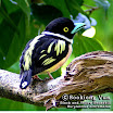 B&Y-Broadbill.jpg