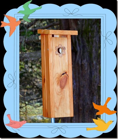 chickadee_framed