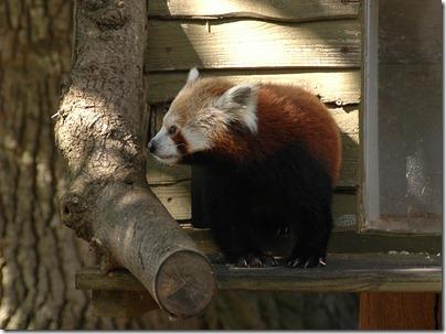marwell zoo 043