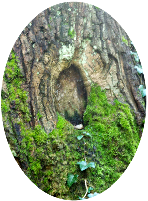 fairy tree door