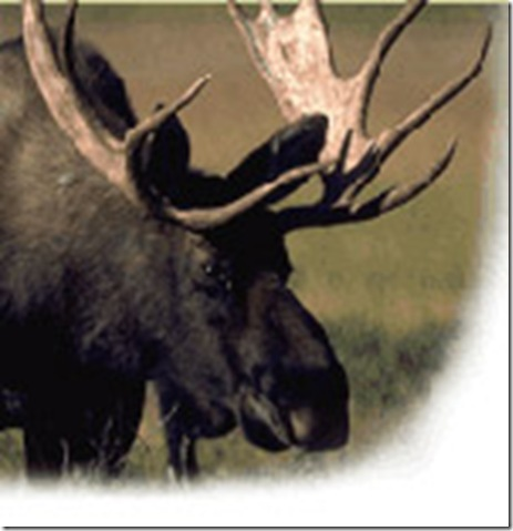 gfx-moose