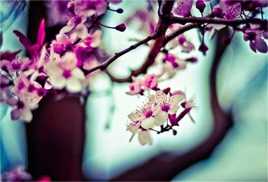 รูปภาพสวยๆ