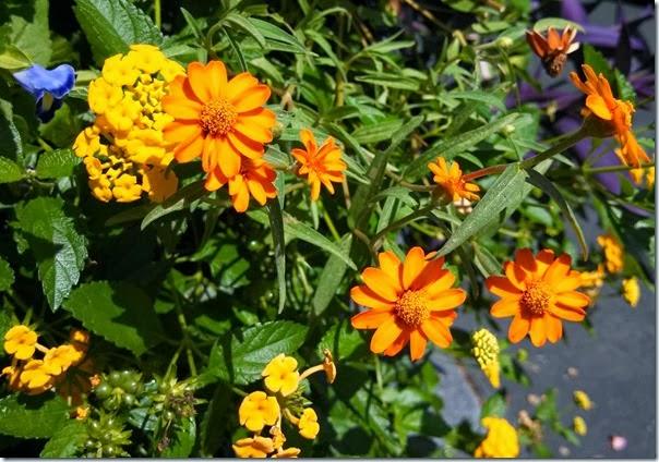 flowers 09b