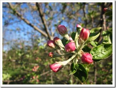 20120507_spring-property_004
