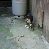 カエル跳ねる