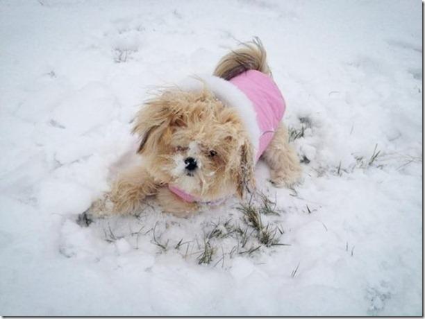 cute-puppies-awww-30